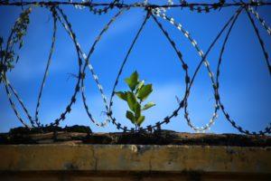 Prison Freedom