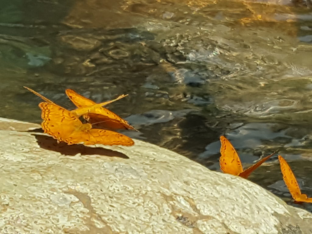 waterfall eft energy butterflies